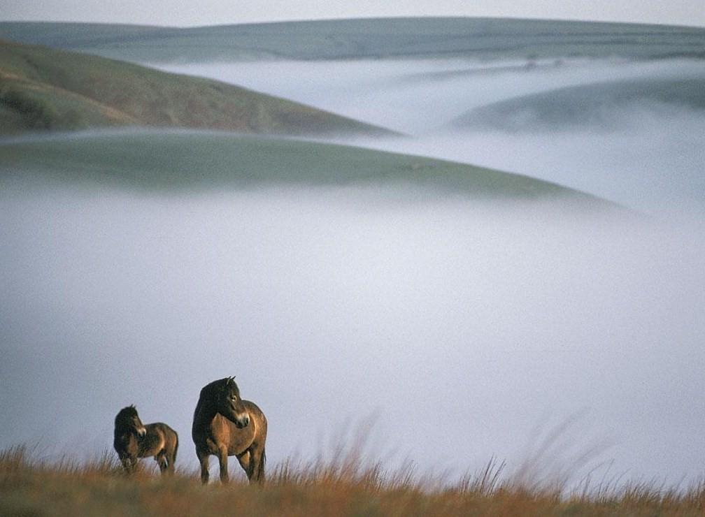 """Résultat de recherche d'images pour """"chevaux brume"""""""